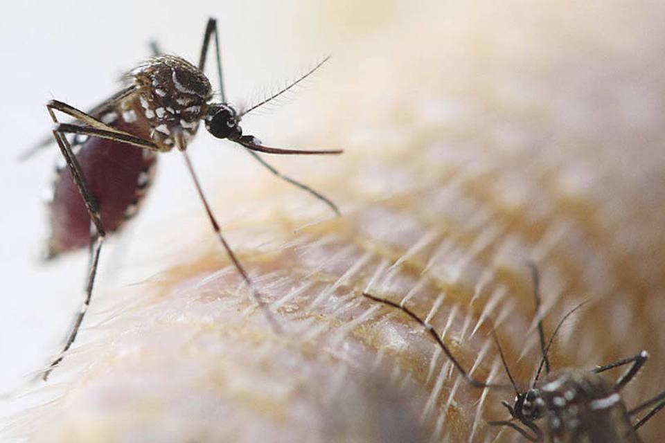 dengue, repelentes, mosquito, produtos, contra, melhor, eficientes, evitar, proteger, esgotam, prometem, deles, quais, tirar, proveito, Entenda, picada