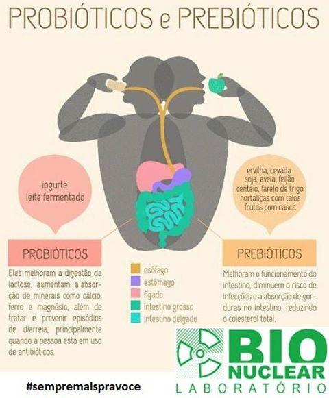 intestino, bactérias, saúde, intestinal, órgão, benéficas, organismo, evitando, equilibrada, parede, deixando-a, protegem, porque, probióticos, especialmente, atuam, sobre, flora